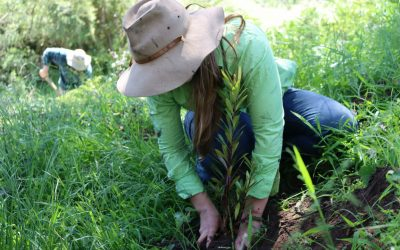 Bushfire recovery that restores ecological hope
